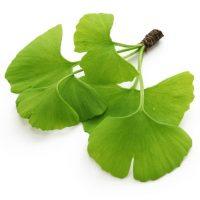 les feuilles de Ginkgo qui soutient la sexualité
